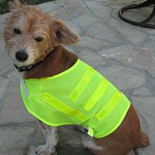Pet Safety Vest One size Fits All